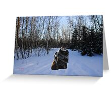 River on Cross-country Ski Trail in Park Voyageur Greeting Card