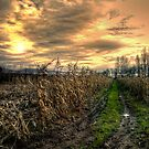 After The Harvest by Charles & Patricia   Harkins ~ Picture Oregon