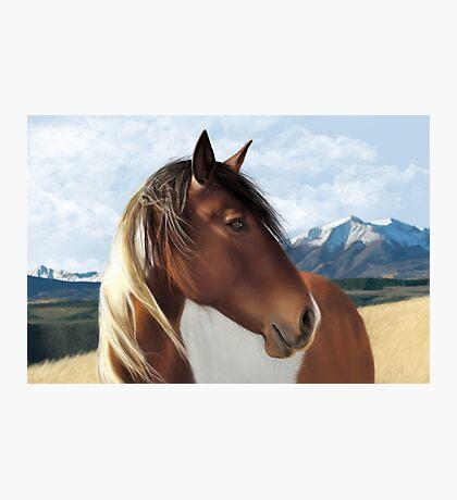 Horse Landscape Photographic Print