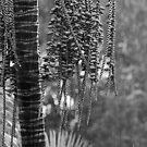 Palm in the rain by Sara Lamond