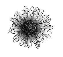 Daisy  by callahan13