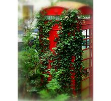 Overgrown Phonebox Photographic Print