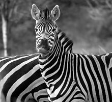 Zebra Smiling by FrankSolomon