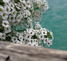 French Flowers by Suzanne Schroeder