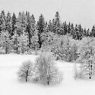 Walking through the snow by Kurt  Tutschek