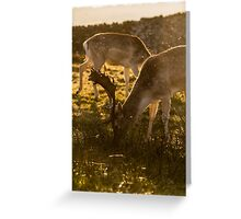 Feeding Stags Greeting Card