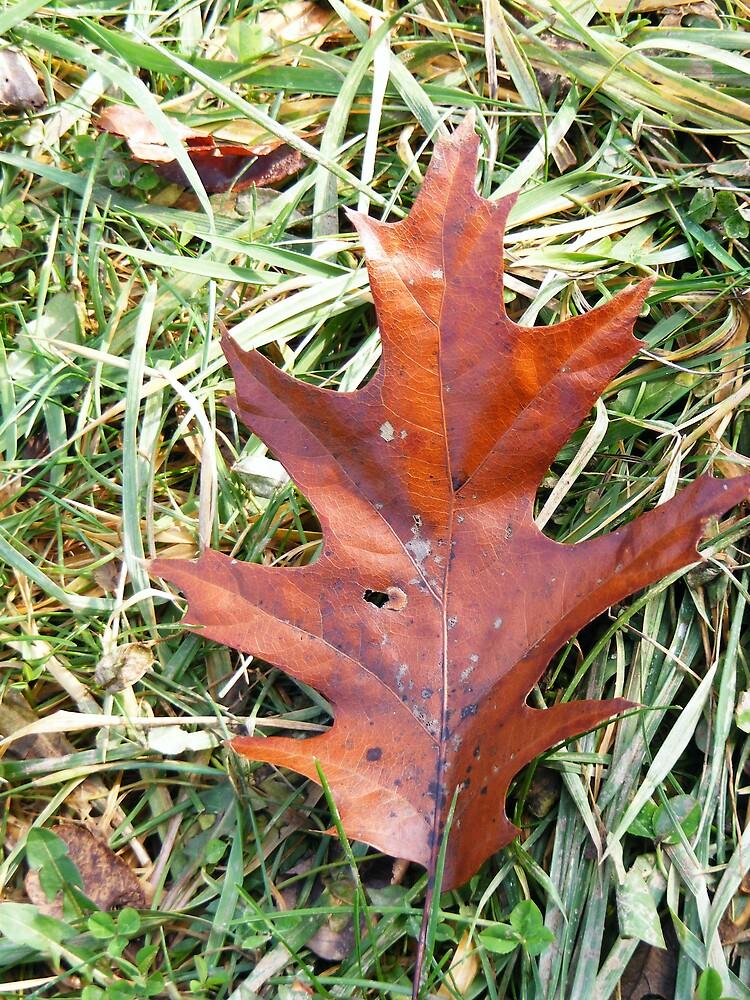fall by rebecca smith