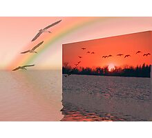 Wish I could fly! Photographic Print