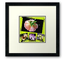 Sunshine and Rain - Rose and Cape Daisies Collage  Framed Print