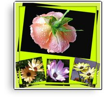 Sunshine and Rain - Rose and Cape Daisies Collage  Canvas Print