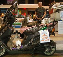 Cat Man of Kuala Lumpur by ApeArt
