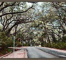 Tree Lined Road by Ginny Schmidt