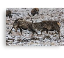 Stags Rutting in the Snow Canvas Print