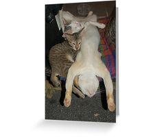 Kuala Lumpur Moped Cats Greeting Card