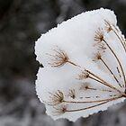 Ice Flower by Alixzandra