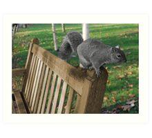 The squirrel Art Print