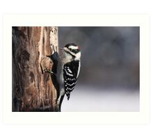 Male Downy Woodpecker Art Print