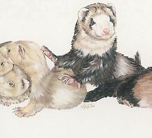 Ferrets by BarbBarcikKeith