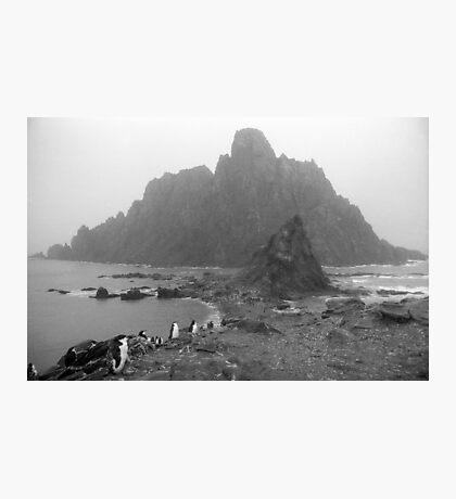 Penguin Gothic Photographic Print