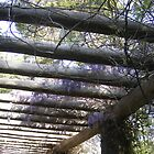Lilac Dreams by Danika & Scott Bennett-McLeish