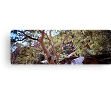 River Red Gums, Kings Canyon Canvas Print