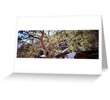 River Red Gums, Kings Canyon Greeting Card