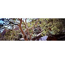 River Red Gums, Kings Canyon Photographic Print
