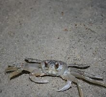 Crab by sommershots