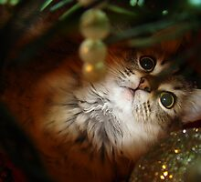 Christmas Kitty by LauraElizabeth