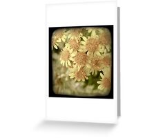 YELLOW PINK BLOSSOM Greeting Card
