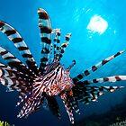 Lionfish, Wakatobi National Park, Indonesia by Erik Schlogl