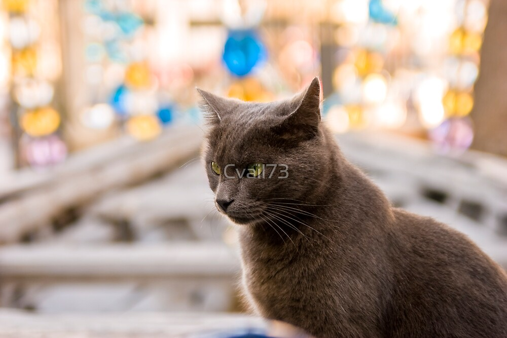 The cat who likes museums by Cvail73