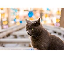 The cat who likes museums Photographic Print