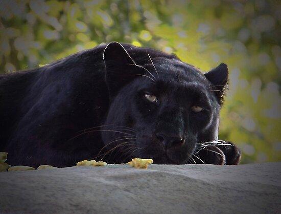 Meow by Gail Falcon