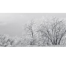 Ice Trees Photographic Print