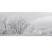 Ice Trees, Too Photographic Print