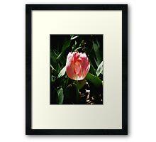 sunkissed tulip Framed Print
