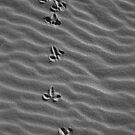 natures footprints by melanie tschiderer