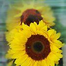 sun flower by kathywaldron