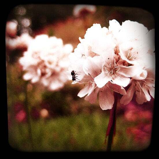 PINK BLOSSOM WITH ANT by Bianca Stanton