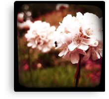 PINK BLOSSOM WITH ANT Canvas Print