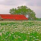 Red Barn and White Flowers by Joe Hewitt