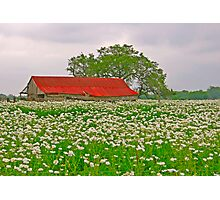 Red Barn and White Flowers Photographic Print