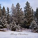 Merry Christmas by Bryan D. Spellman
