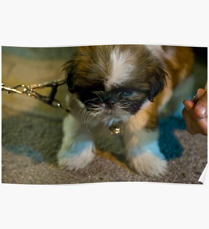 Mini baby dog - extra cute puppy Poster