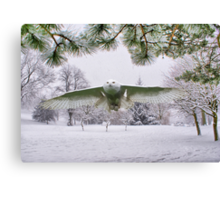 Snowy Owl In A Winter Wonderland Canvas Print