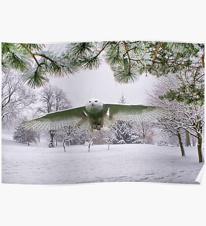 Snowy Owl In A Winter Wonderland Poster