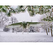 Snowy Owl In A Winter Wonderland Photographic Print