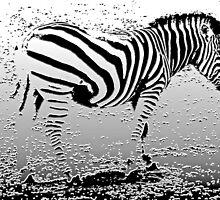 Zebra by Roz McQuillan