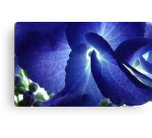 Hydrangea2 Canvas Print